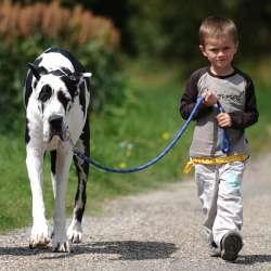 Dog School 77 : Education canine